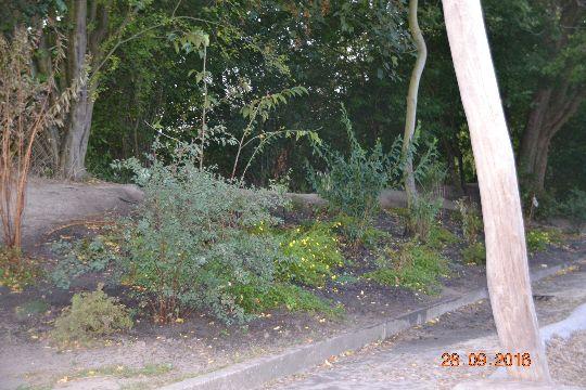 Die im Frühjahr gepflanzten Stauden und Büsche am Erdwall auf dem Schulhof sind gut angewachsen